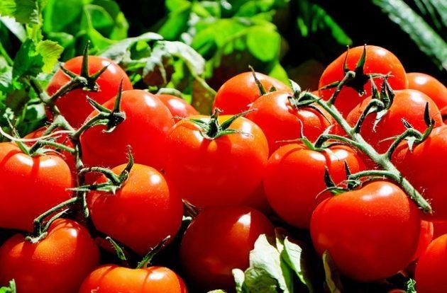 Partita IVA agricola: regime speciale