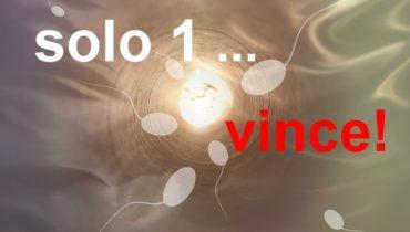 Business Plan Vincente!
